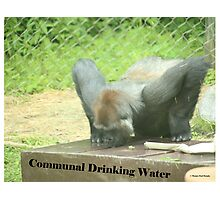 Communal Drinking Water Photographic Print