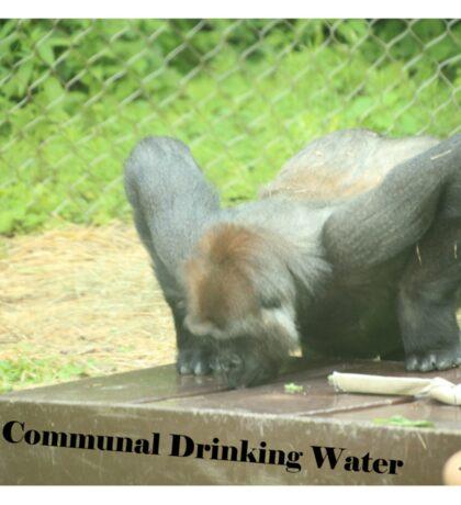 Communal Drinking Water Sticker