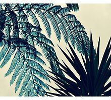 Green of the Tropics Photographic Print