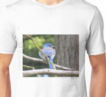 Stellar Jay  Unisex T-Shirt