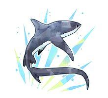 Thresher Shark by stormful