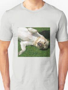 Meet Harvey - Cute K9 T-Shirt