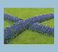 The Big Blue X - Keukenhof Gardens Baby Tee