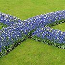 The Big Blue X - Keukenhof Gardens by BlueMoonRose