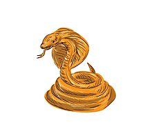 Cobra Viper Snake Coiled Drawing Photographic Print