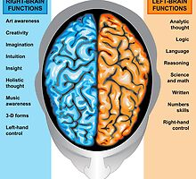 Human brain left and right functions by Medusa81