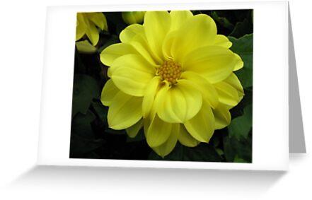 Lovely in Lemon - Dahlia Beauty by BlueMoonRose