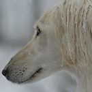 Saluki in the snow by sandyprints