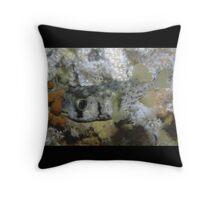 Three-barred Porcupinefish, Ship Rock, Port Hacking Throw Pillow