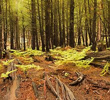 Pine Forest by BGSPhoto