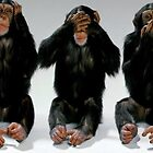 wise monkeys by abeer hassan