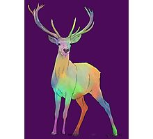 Coloured Stag Photographic Print