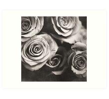 Medium format analog black and white photo of white rose flowers Art Print