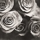 Medium format analog black and white photo of white rose flowers by edwardolive