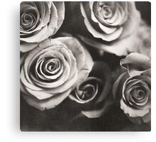 Medium format analog black and white photo of white rose flowers Canvas Print