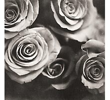 Medium format analog black and white photo of white rose flowers Photographic Print