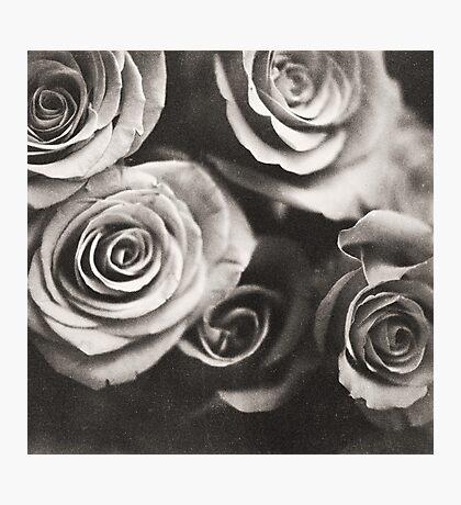 Medium format analog black and white photo of white rose flowers Photographic Print