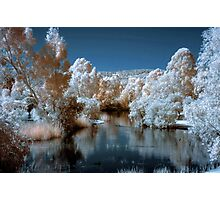 Westfield Herron Reserve IR with blue sky Photographic Print