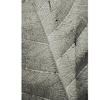 Macro Leaf Detail Photographic Print