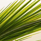 Palm Leaf Abstract by Debbie Oppermann