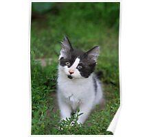 Serious Kitty Poster