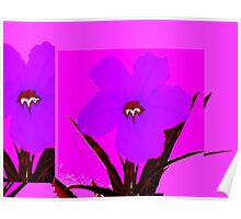 pop flower violet blue Poster