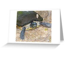 Mrs Turtle Greeting Card