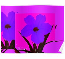 Blue pop flower on Magenta Poster