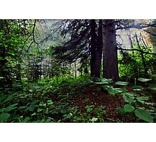My Quiet Hide Away Photographic Print