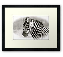 Zebra In Black & White Framed Print