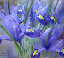 Iris Bouquet by Carol  Cavalaris