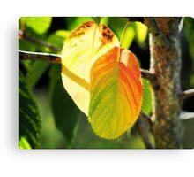 Tinges Of Autumn Canvas Print