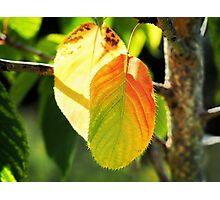 Tinges Of Autumn Photographic Print