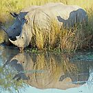 Shadows & Reflections !! by jozi1
