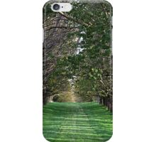 Trees - Country Victoria - Healesville iPhone Case/Skin