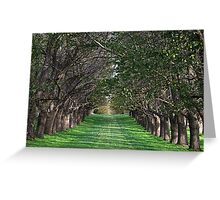 Trees - Country Victoria - Healesville Greeting Card
