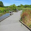 Wetlands Walkway by Jack Ryan