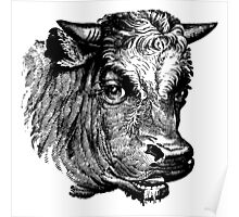 Vintage Cattle Head - Small horns - woodcut style Poster