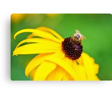 Bumble Bee on a Yellow Flower Canvas Print
