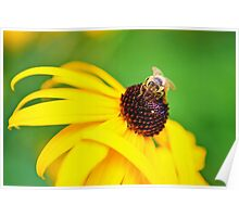 Bumble Bee on a Yellow Flower Poster