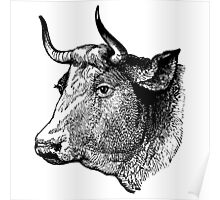 Demure Cattle Head - woodcut style Poster