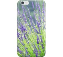 Lavender in the rain iPhone Case/Skin