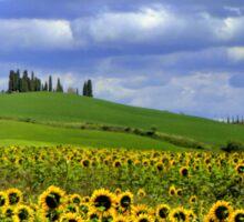 Tuscany landscape Sticker