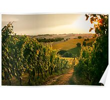 Vineyard fields in Marche, Italy Poster