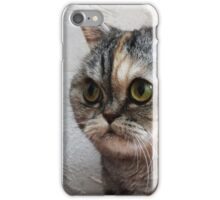 Scottish Fold Surprized Look iPhone Case/Skin