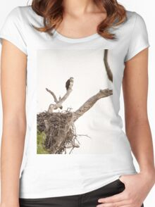 Nesting Osprey Women's Fitted Scoop T-Shirt
