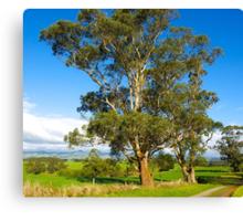 Remnant Eucalyptus, Mt Worth, Gippsland, Australia. Canvas Print