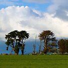 Storm approaching Mt Worth farmland, Gippsland, Australia. by johnrf