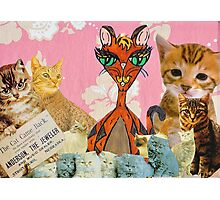 Cute Cat Collage 1 Photographic Print