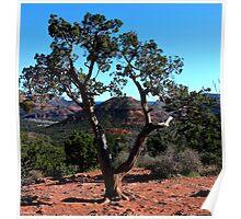 Scenic View in Sedona, Arizona Poster